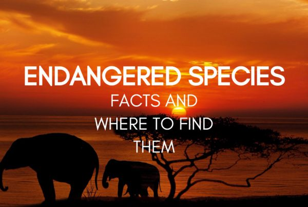 Endangered species and where to find them